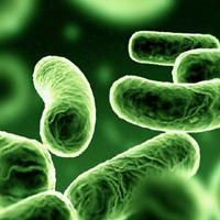 راز باکتري هاي مفيد براي حفظ سلامت