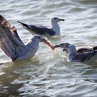 عکس/غذا دادن به پرندگان ساحلی به مناسبت روز ملی حیوانات