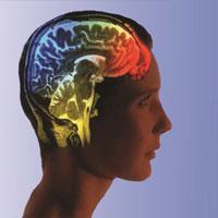 مغز در ابتلا به دیابت چه نقشی دارد