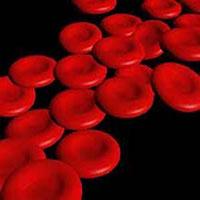 25 درصد سرطان هاي خون با چكاپهاي دورهاي كشف ميشوند