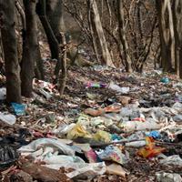 نابودی جنگلهای شمال کشور با دفع غیربهداشتی زباله/ بیمارستانهای شمال کشور دستگاه زباله سوز ندارند