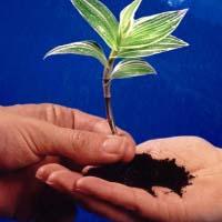 استقبال چشمگیر ایرانیان از آئین درختکاری
