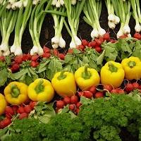 لزوم توجه بیشتر به تولید محصولات ارگانیک