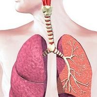 11 واقعیت جالب درباره دستگاه تنفس