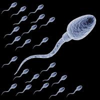 آنچه موجب نابودی اسپرم ها می شود