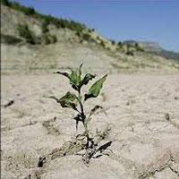 جنگلهای ایران بیابان میشود