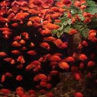 عکس/زنگ خطر نابودی ماهیان خال قرمز/ رودخانه ای که زباله دانی شد