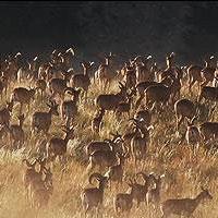سایه خشکسالی بر سر پارک ملی گلستان