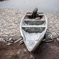 کم آبی ماهیان تالاب های گرگان را کشت