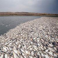 مرگ هزاران ماهی در رودخانه قره سو