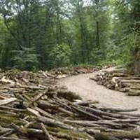 کارشناسان: نابود کردن جنگل ها باعث شیوع ابولا می شود