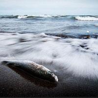 یکه تازی مازندران در سرطان رهاورد آلودگی دریا برای مردم