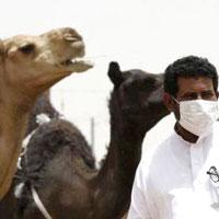 واردات شترهای آلوده به ویروس کرونا در سیستان و بلوچستان!