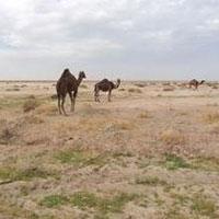 تالاب جازموریان بیابان شد/ فاجعه در جنوب کرمان