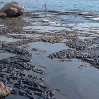 سالانه 20 تن روغن به دریای خزر سرازیر میشود