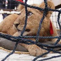 حیات وحش می میرد از بس قاچاقچی دارد