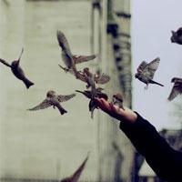 راستي تعداد پرندگان تهران كاهش يافته؟