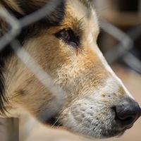 حقوق حيوانات، خلأ قانوني دارد