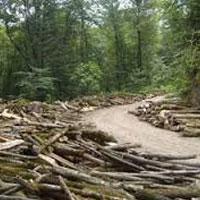خطر محو «جنگل» در 4 استان
