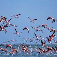 انرژی ها را دوستدار پرندگان کنیم