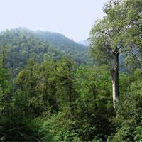 نقاط سياه و سفيد طرح تنفس جنگل