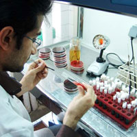 خطر تعطیلی آزمایشگاه های پزشکی/ هیئت وزیران ورود کند