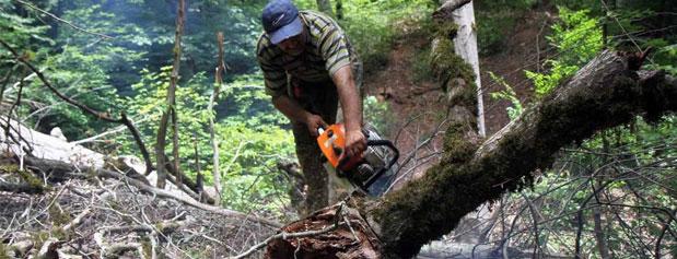 تخریب ۳۵۰ مترمربع از جنگلهای ایران در هر ثانیه