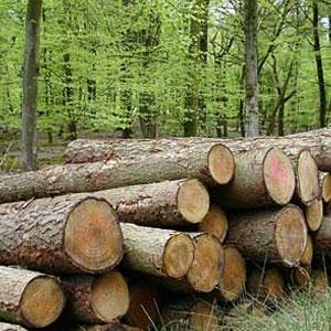 فروپاشی جنگل