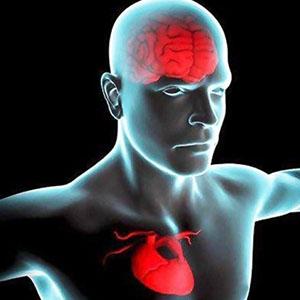 پلاک های پروتئین آلزایمر به قلب آسیب می رسانند
