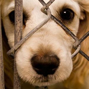خالی کردن دق دلی سر حیوانات