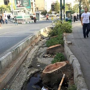 وضعیت بحرانی درختان خیابان ولیعصر(عج)