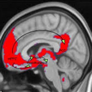کشف عملکرد دوپامین در افسردگی پس از زایمان