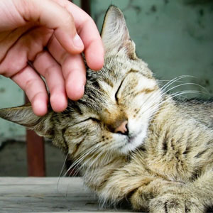 شایعات درباره بیماری خراش گربه را باور نکنید
