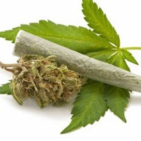 گلدانهای خانگی بازار ماریجوانای ایران را تامین میکند؟