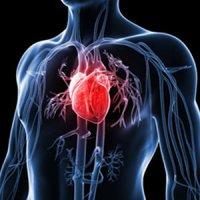 اندازه دور کمر پیش بینی کننده ریسک حمله قلبی