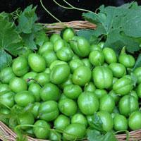 مصرف گوجه سبز برای این افراد ممنوع