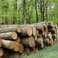 طرح تنفس جنگلها تا چه ميزان توانسته مانع از قاچاق چوب شود؟