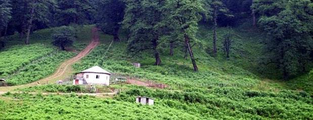 کاهش حجم جنگلهای مازندران به یک میلیون و ۹۰۰ هزار هکتار