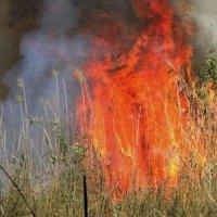 خوزستانیها چشمانتظار آتشبس در هورالعظیم