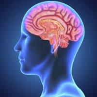 اینترنت با مغز ما چه میکند؟