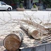 جريمه ۸۱ميلياردي براي قطع درختان