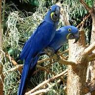 تایید انقراض هشت گونه پرنده طی دهه اخیر
