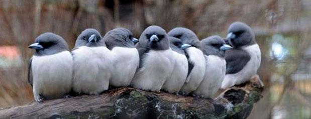 تهران از آواز پرندگان خالی میشود