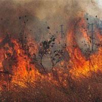 جنگلها همچنان در دام آتش