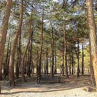 احتمال جدید درباره خشکشدن درختان چیتگر؛ پای مأموران تعدیلشده در میان است؟