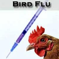 آنفلوآنزایی که منجر به مرگ و میر در جامعه شده، مرغی است؟