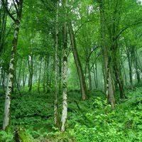 جنگلهای شمال از نقشه ایران پاک میشود؟