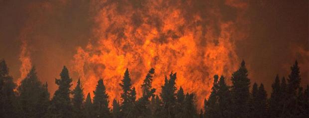 هوشمندسازی جنگلها منتظر تصمیم مسئولین