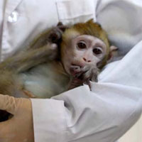 ویروس کرونا روی میمونها آزمایش شد