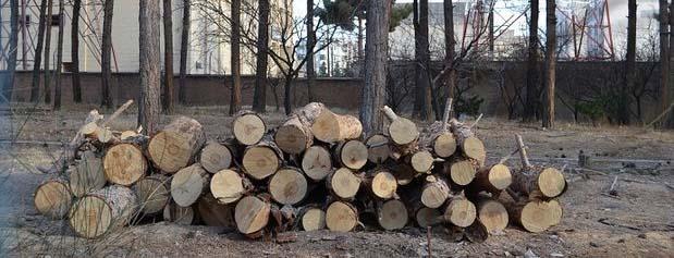 مورد عجیب بودجه ۱۴۰۰ شهرداری تهران؛ درآمد ۳۰۰ میلیاردی از قطع درختان
